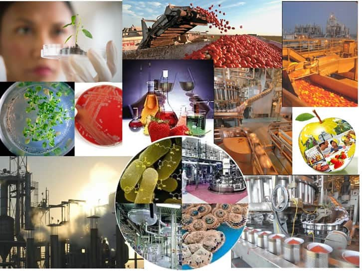 Gıda Mühendisliği Nedir Gıda Mühendisi Ne İş Yapar