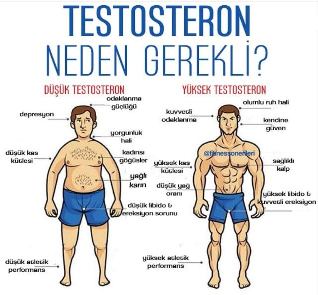 Testosteron Nedir - Ne İşe Yarar