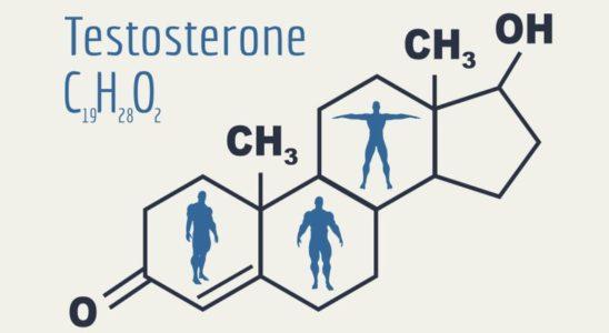 Testosteron Nedir Testosteron Eksikliği ve Testosteron Arttırma Yolları
